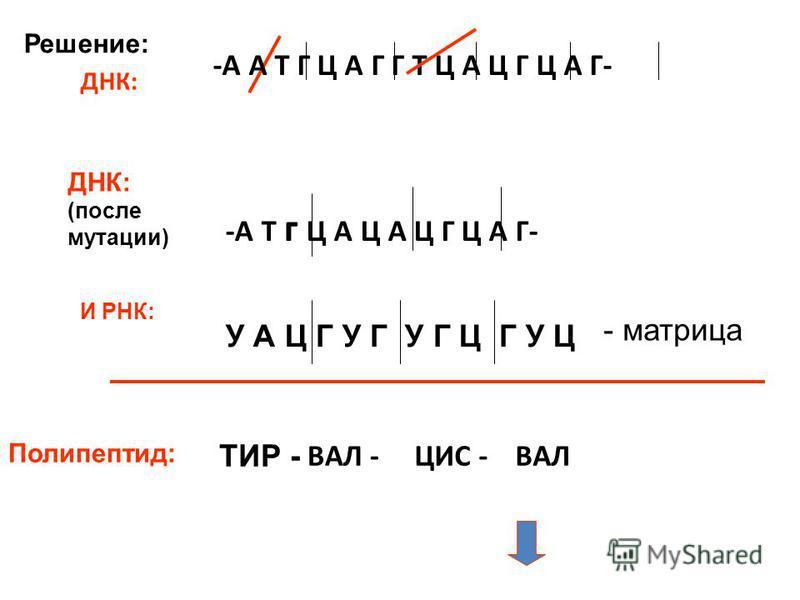 -А Т г Ц А Ц А Ц Г Ц А Г- ДНК: (после мутации) И РНК: У А Ц Г У Г У Г Ц Г У Ц - матрица Полипептид: ТИР - ДНК: -А А Т Г Ц А Г Г Т Ц А Ц Г Ц А Г- ВАЛ -ЦИС -ВАЛ Решение: