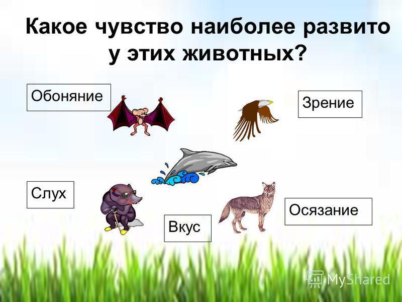 Какое чувство наиболее развито у этих животных? Зрение Обоняние Слух Осязание Вкус
