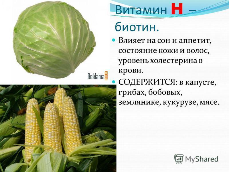 Витамин H – биотин. Влияет на сон и аппетит, состояние кожи и волос, уровень холестерина в крови. СОДЕРЖИТСЯ: в капусте, грибах, бобовых, землянике, кукурузе, мясе.