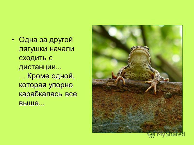 Кроме одной, которая упорно карабкалась все выше...Одна за другой лягушки начали сходить с дистанции...... Кроме одной, которая упорно карабкалась все выше...
