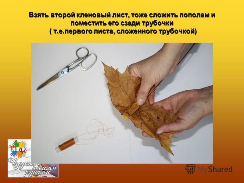 Взять второй кленовый лист, тоже сложить пополам и поместить его сзади трубочки ( т.е.первого листа, сложенного трубочкой)