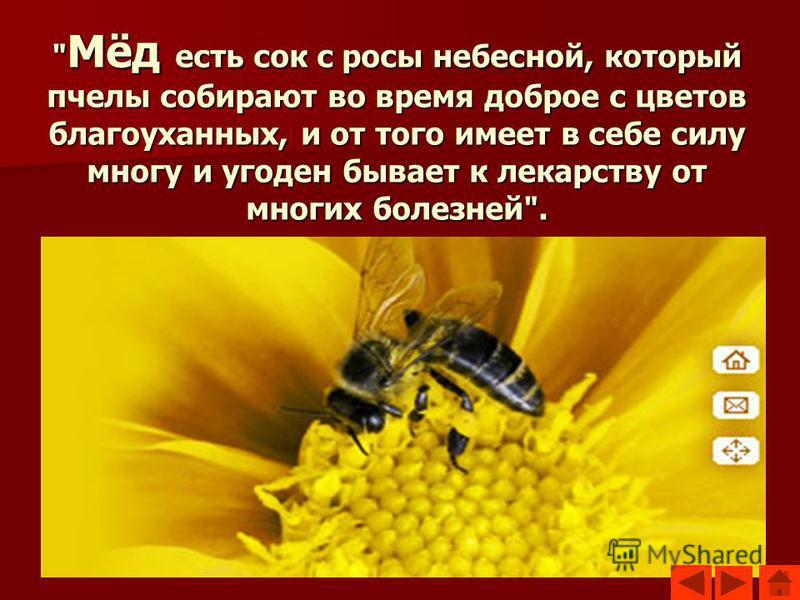 Мёд есть сок с росы небесной, который пчелы собирают во время доброе с цветов благоуханных, и от того имеет в себе силу многу и угоден бывает к лекарству от многих болезней.