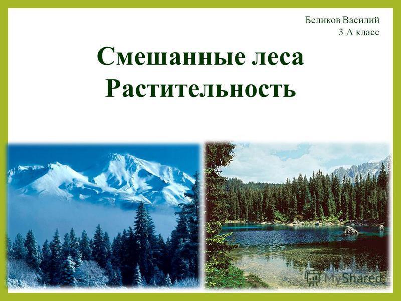 Смешанные леса Растительность Беликов Василий 3 А класс