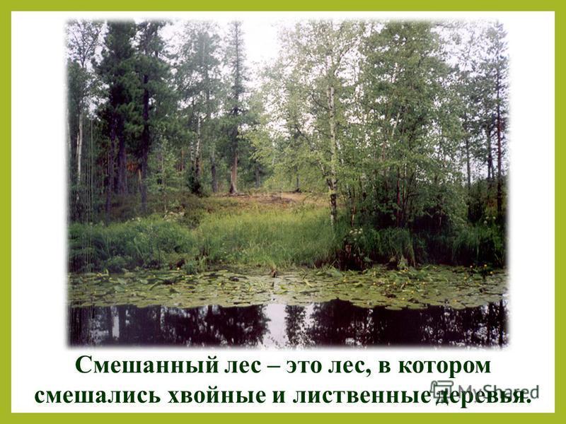 Смешанный лес – это лес, в котором смешались хвойные и лиственные деревья.