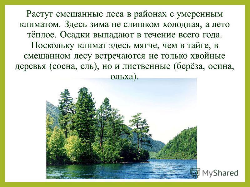 Растут смешанные леса в районах с умеренным климатом. Здесь зима не слишком холодная, а лето тёплое. Осадки выпадают в течение всего года. Поскольку климат здесь мягче, чем в тайге, в смешанном лесу встречаются не только хвойные деревья (сосна, ель),