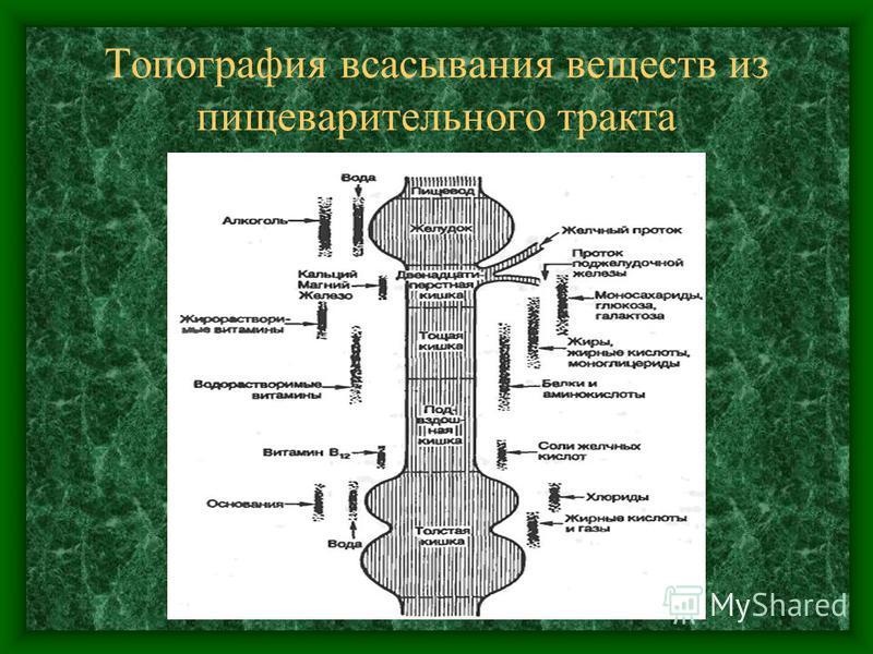 Топография всасывания веществ из пищеварительного тракта