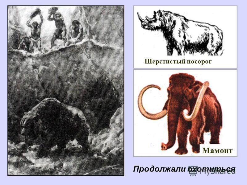 8 Шерстистый носорог Мамонт Продолжали охотиться