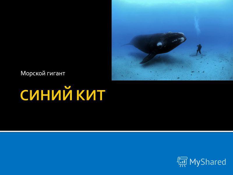 Морской гигант