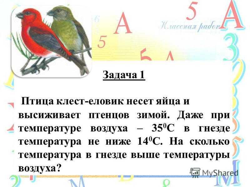 Задача 1 Птица клест-еловик несет яйца и высиживает птенцов зимой. Даже при температуре воздуха – 35 0 С в гнезде температура не ниже 14 0 С. На сколько температура в гнезде выше температуры воздуха?