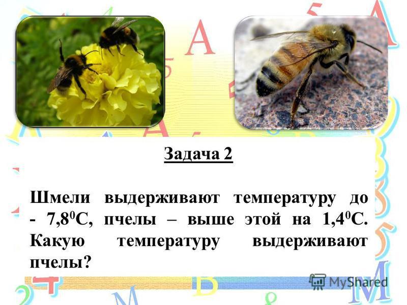 Задача 2 Шмели выдерживают температуру до - 7,8 0 С, пчелы – выше этой на 1,4 0 С. Какую температуру выдерживают пчелы?