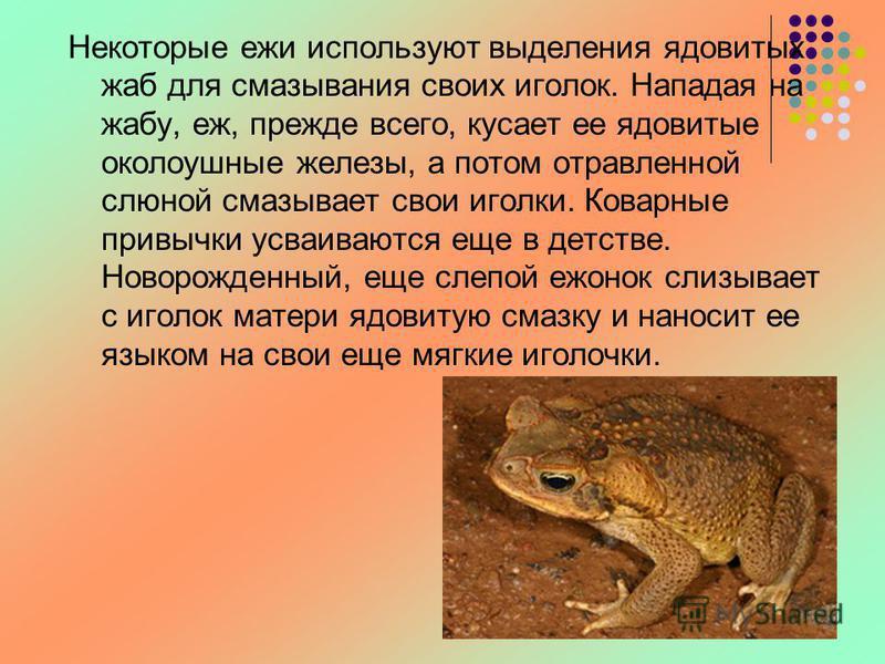 Некоторые ежи используют выделения ядовитых жаб для смазывания своих иголок. Нападая на жабу, еж, прежде всего, кусает ее ядовитые околоушные железы, а потом отравленной слюной смазывает свои иголки. Коварные привычки усваиваются еще в детстве. Новор