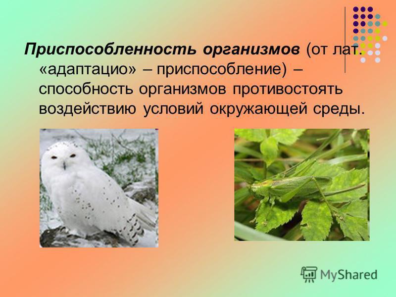 Приспособленность организмов (от лат. «адаптация» – приспособление) – способность организмов противостоять воздействию условий окружающей среды.