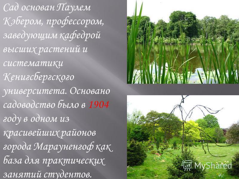 Сад основан Паулем Кэбером, профессором, заведующим кафедрой высших растений и систематики Кенигсбергского университета. Основано садоводство было в 1904 году в одном из красивейших районов города Марауненгоф как база для практических занятий студент