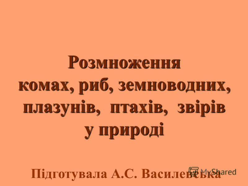 Розмноження комах, риб, земноводних, плазунів, птахів, звірів у природі Підготувала А.С. Василевська