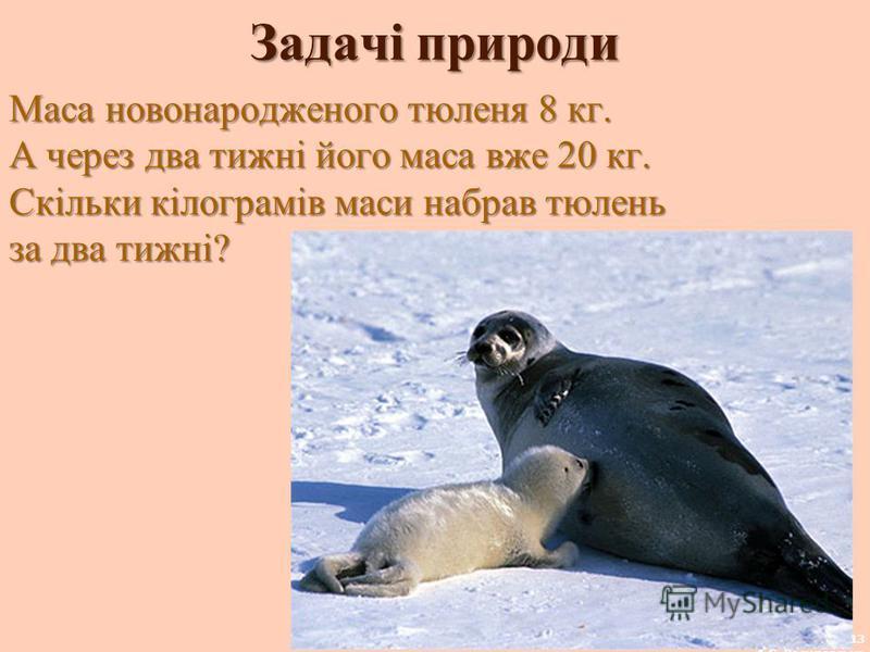 Задачі природи Маса новонародженого тюленя 8 кг. А через два тижні його маса вже 20 кг. Скільки кілограмів маси набрав тюлень за два тижні? 13 А.С. Василевська