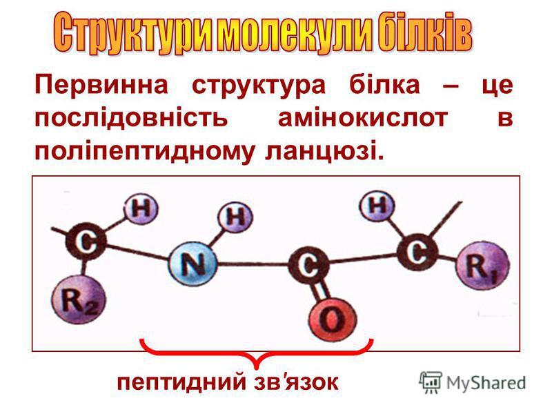 Первинна структура білка – це послідовність амінокислот в поліпептидному ланцюзі. пептидний зв'язок