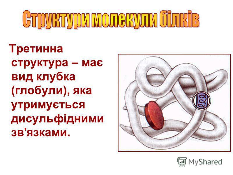 Третинна структура – має вид клубка (глобули), яка утримується дисульфідними зв'язками.