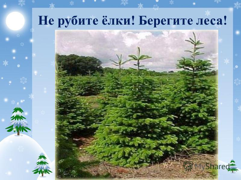 Не рубите ёлки! Берегите леса!