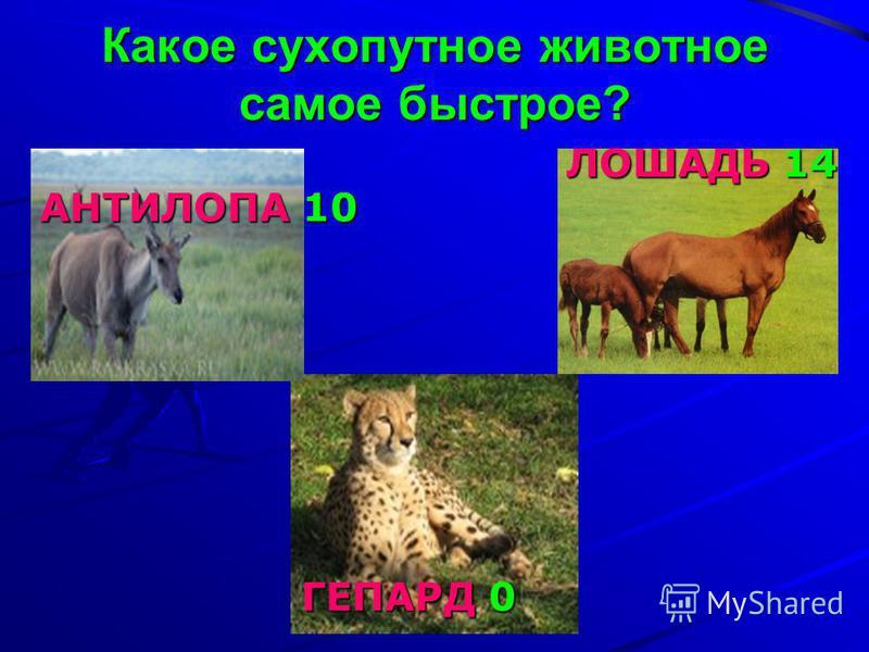 Какое сухопутное животное самое быстрое? ЛОШАДЬ 14 АНТИЛОПА 10 АНТИЛОПА 10 ГЕПАРД 0 ГЕПАРД 0