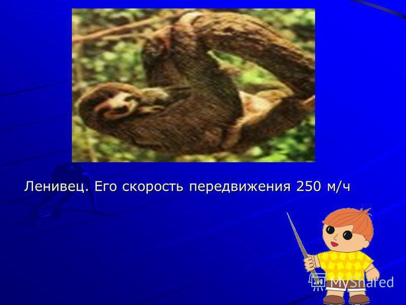 Ленивец. Его скорость передвижения 250 м/ч