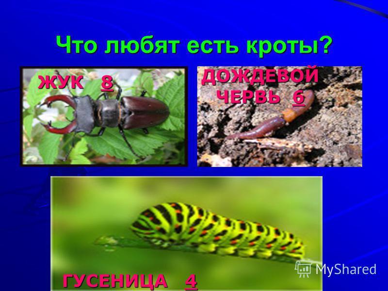 Что любят есть кроты? ДОЖДЕВОЙ ЧЕРВЬ 6 ЖУК 8 ЖУК 8 ГУСЕНИЦА 4 ГУСЕНИЦА 4