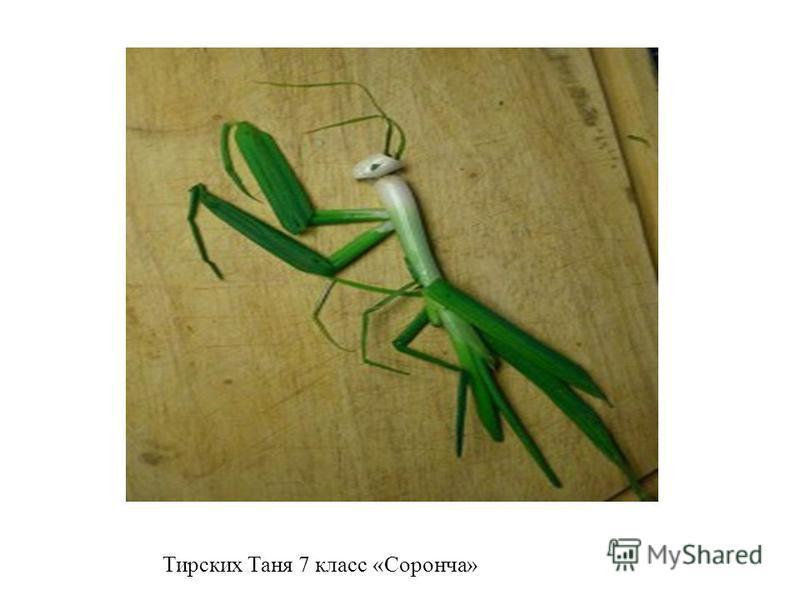 Тирских Таня 7 класс «Соронча»