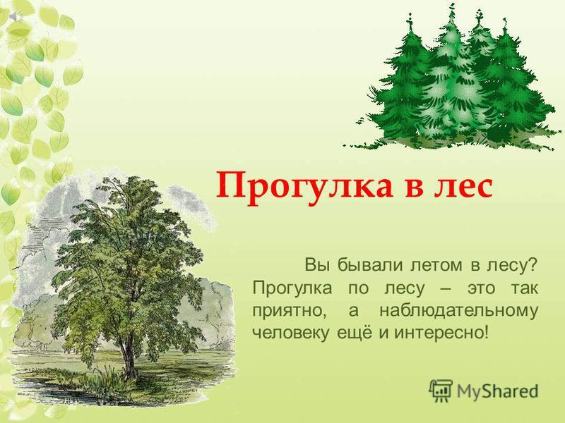 Прогулка в лес Вы бывали летом в лесу? Прогулка по лесу – это так приятно, а наблюдательному человеку ещё и интересно!