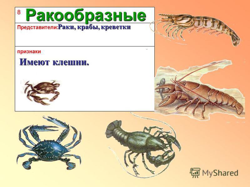 8 признаки Представители: Ракообразные Раки, крабы, креветки Раки, крабы, креветки Имеют клешни.