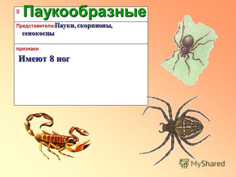 9 признаки Представители: Паукообразные Имеют 8 ног Пауки, скорпионы, сенокосцы Пауки, скорпионы, сенокосцы