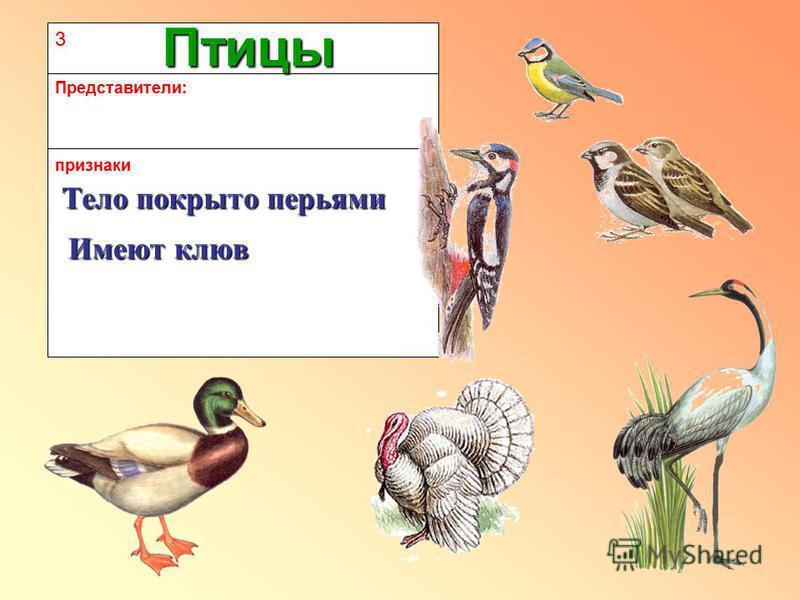 3 признаки Представители: Птицы Тело покрыто перьями Имеют клюв