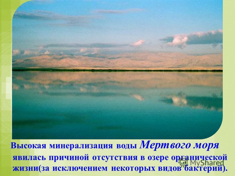 Высокая минерализация воды Мертвого моря явилась причиной отсутствия в озере органической жизни(за исключением некоторых видов бактерий).