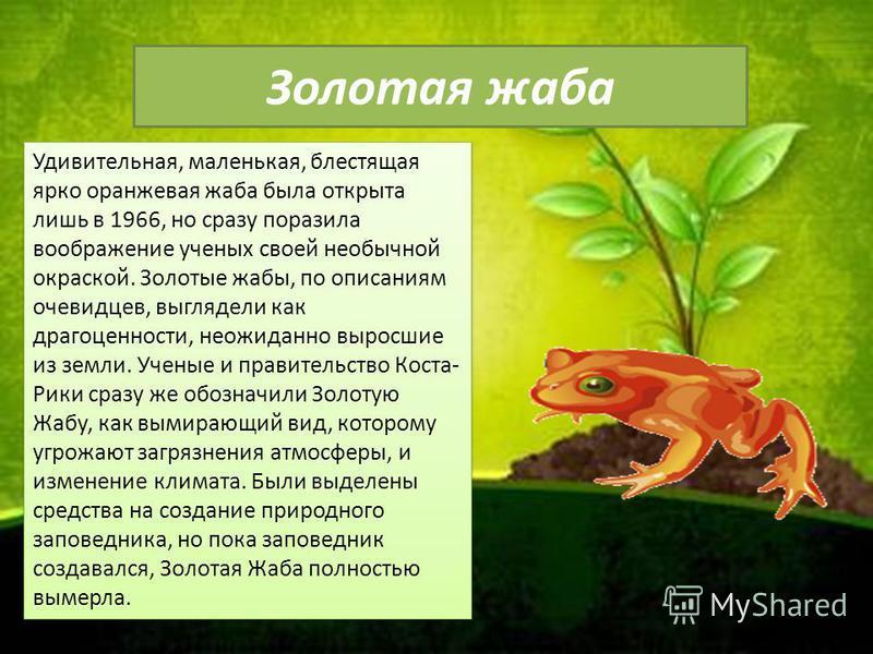 Золотая жаба Удивительная, маленькая, блестящая ярко оранжевая жаба была открыта лишь в 1966, но сразу поразила воображение ученых своей необычной окраской. Золотые жабы, по описаниям очевидцев, выглядели как драгоценности, неожиданно выросшие из зем