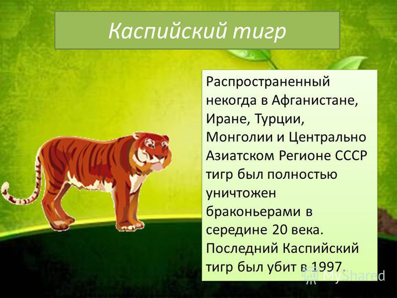 Каспийский тигр Распространенный некогда в Афганистане, Иране, Турции, Монголии и Центрально Азиатском Регионе СССР тигр был полностью уничтожен браконьерами в середине 20 века. Последний Каспийский тигр был убит в 1997.