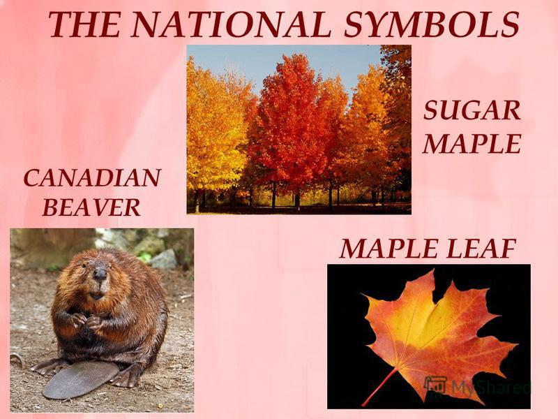 THE NATIONAL SYMBOLS SUGAR MAPLE MAPLE LEAF CANADIAN BEAVER