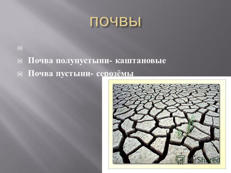 Почва полупустыни - каштановые Почва пустыни - серозёмы