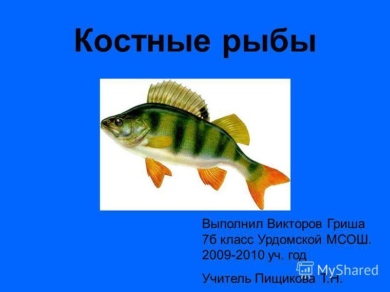Костные рыбы Выполнил Викторов Гриша 7 б класс Урдомской МСОШ. 2009-2010 уч. год Учитель Пищикова Т.Н.