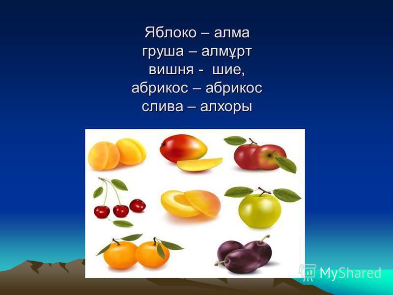 Яблоко – алма груша – алмұрт вишня - шее, абрикос – абрикос слива – алхоры Яблоко – алма груша – алмұрт вишня - шее, абрикос – абрикос слива – алхоры