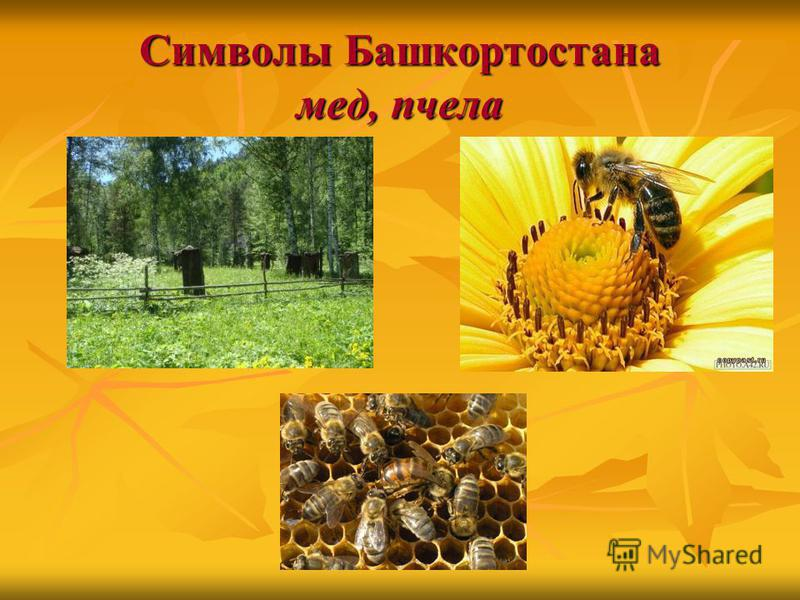 Символы Башкортостана мед, пчела