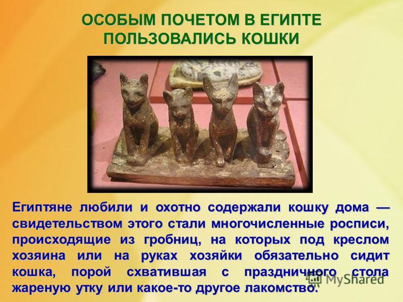 ОСОБЫМ ПОЧЕТОМ В ЕГИПТЕ ПОЛЬЗОВАЛИСЬ КОШКИ Египтяне любили и охотно содержали кошку дома свидетельством этого стали многочисленные росписи, происходящие из гробниц, на которых под креслом хозяина или на руках хозяйки обязательно сидит кошка, порой сх