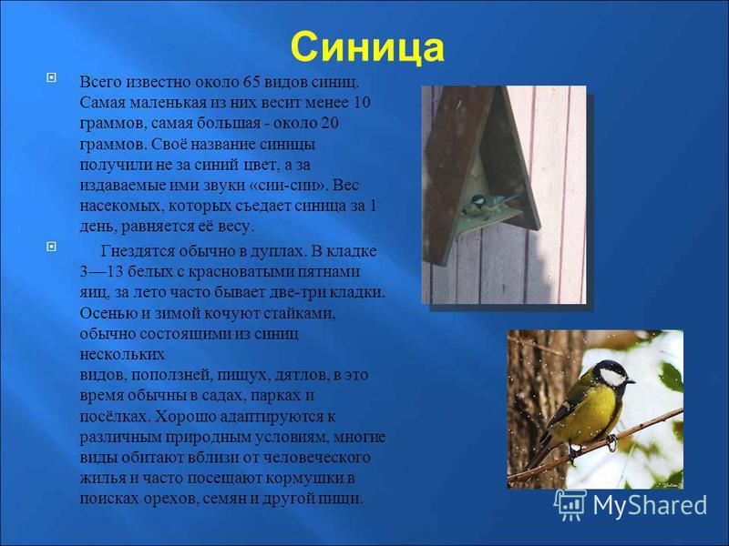 Синица Всего известно около 65 видов синиц. Самая маленькая из них весит менее 10 граммов, самая большая - около 20 граммов. Своё название синицы получили не за синий цвет, а за издаваемые ими звуки «сии-сии». Вес насекомых, которых съедает синица за