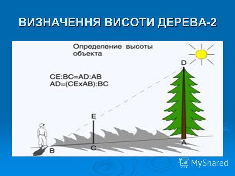 ВИЗНАЧЕННЯ ВИСОТИ ДЕРЕВА-2