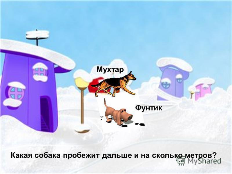 Какая собака пробежит дальше и на сколько метров? Мухтар Фунтик