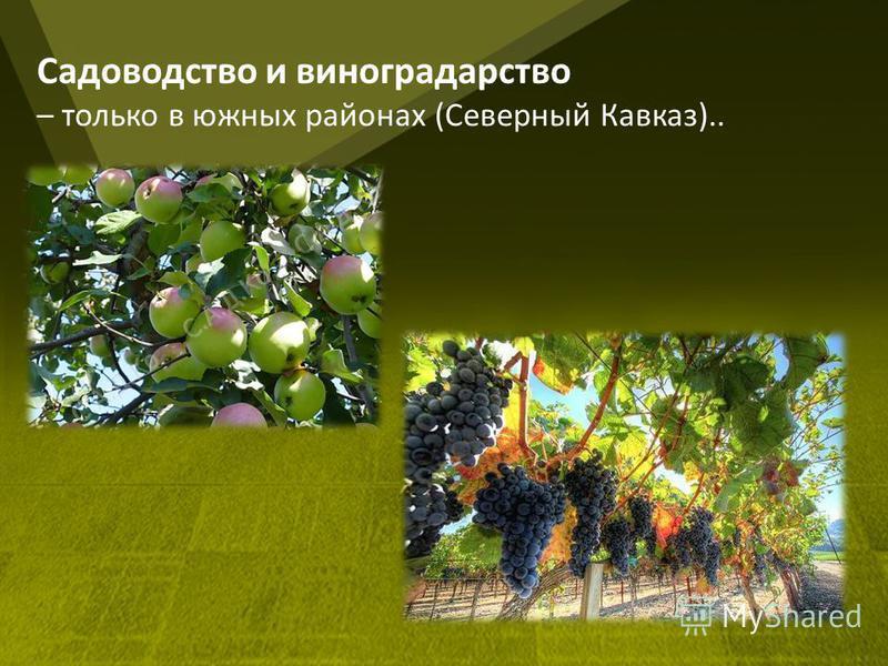 Садоводство и виноградарство – только в южных районах (Северный Кавказ)..