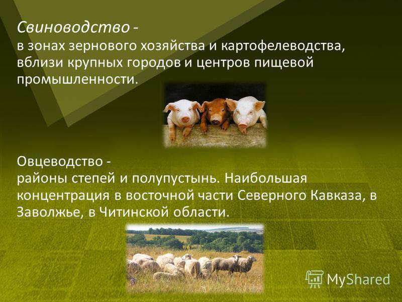 Свиноводство - в зонах зернового хозяйства и картофелеводства, вблизи крупных городов и центров пищевой промышленности. Овцеводство - районы степей и полупустынь. Наибольшая концентрация в восточной части Северного Кавказа, в Заволжье, в Читинской об