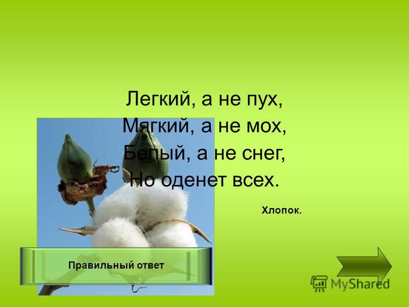 Легкий, а не пух, Мягкий, а не мох, Белый, а не снег, Но оденет всех. Правильный ответ Хлопок.