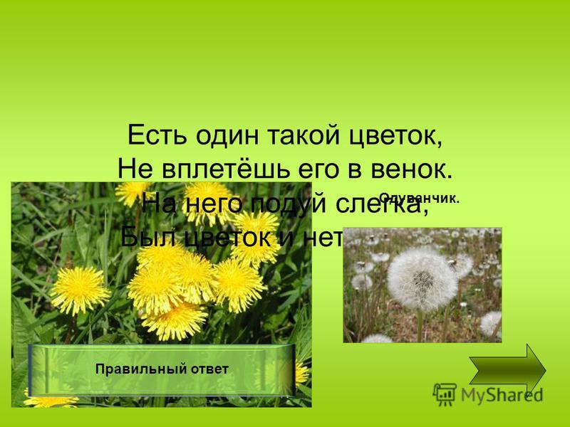 Есть один такой цветок, Не вплетёшь его в венок. На него подуй слегка, Был цветок и нет цветка. Правильный ответ Одуванчик.
