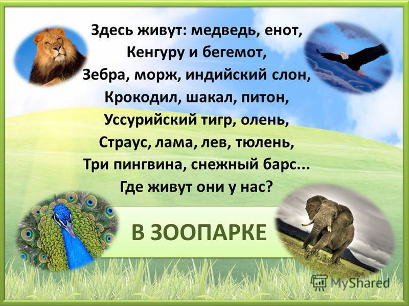 В ЗООПАРКЕ Здесь живут: медведь, енот, Кенгуру и бегемот, Зебра, морж, индийский слон, Крокодил, шакал, питон, Уссурийский тигр, олень, Страус, лама, лев, тюлень, Три пингвина, снежный барс... Где живут они у нас?