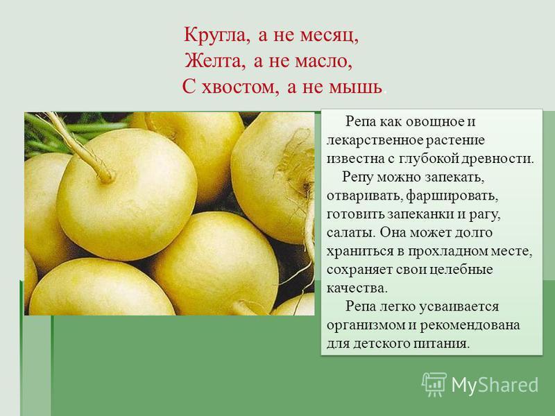Кругла, а не месяц, Желта, а не масло, С хвостом, а не мышь. Репа как овощное и лекарственное растение известна с глубокой древности. Репу можно запекать, отваривать, фаршировать, готовить запеканки и рагу, салаты. Она может долго храниться в прохлад