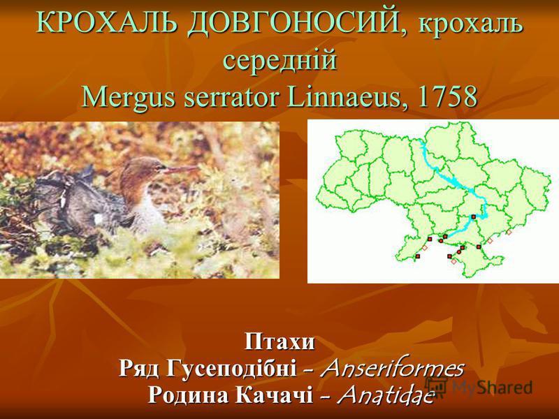 КРОХАЛЬ ДОВГОНОСИЙ, крохаль середній Mergus serrator Linnaeus, 1758 Птахи Ряд Гусеподібні - Anseriformes Родина Качачі - Anatidae