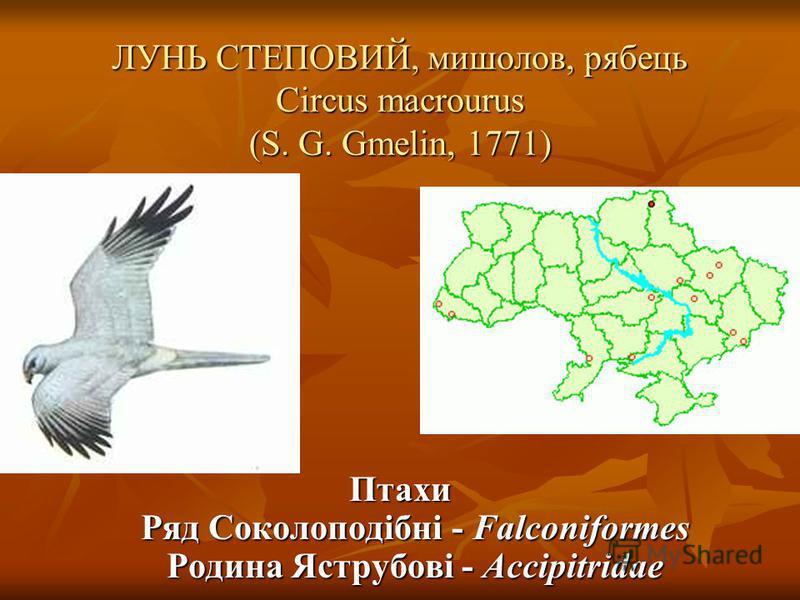 ЛУНЬ СТЕПОВИЙ, мишолов, рябець Circus macrourus (S. G. Gmelin, 1771)